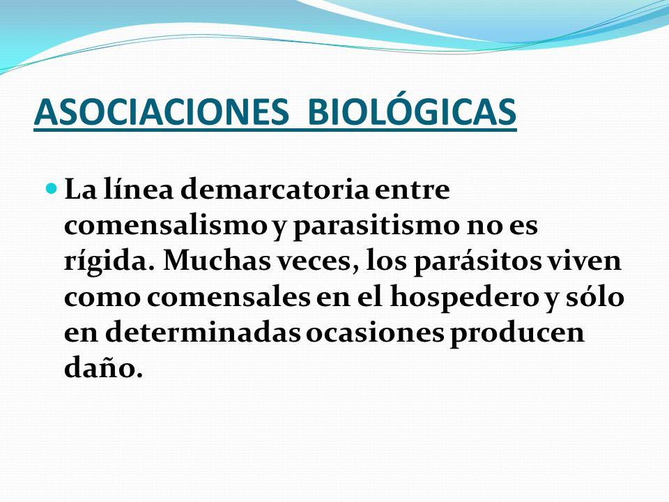 ASOCIACIONES BIOLÓGICAS La línea demarcatoria entre comensalismo y parasitismo no es rígida. Muchas veces, los parásitos viven como comensales en el h