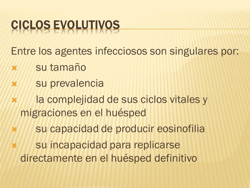 Entre los agentes infecciosos son singulares por: su tamaño su prevalencia la complejidad de sus ciclos vitales y migraciones en el huésped su capacid