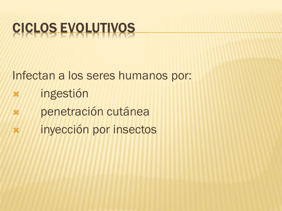 Infectan a los seres humanos por: ingestión penetración cutánea inyección por insectos