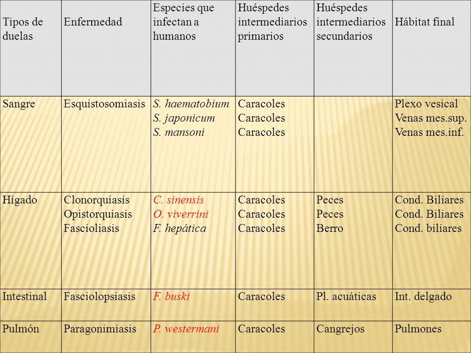 Tipos de duelas Enfermedad Especies que infectan a humanos Huéspedes intermediarios primarios Huéspedes intermediarios secundarios Hábitat final Sangr