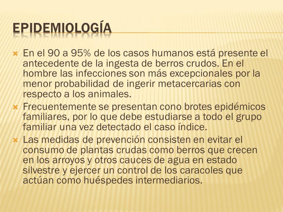 En el 90 a 95% de los casos humanos está presente el antecedente de la ingesta de berros crudos. En el hombre las infecciones son más excepcionales po