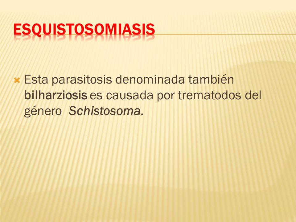 Esta parasitosis denominada también bilharziosis es causada por trematodos del género Schistosoma.