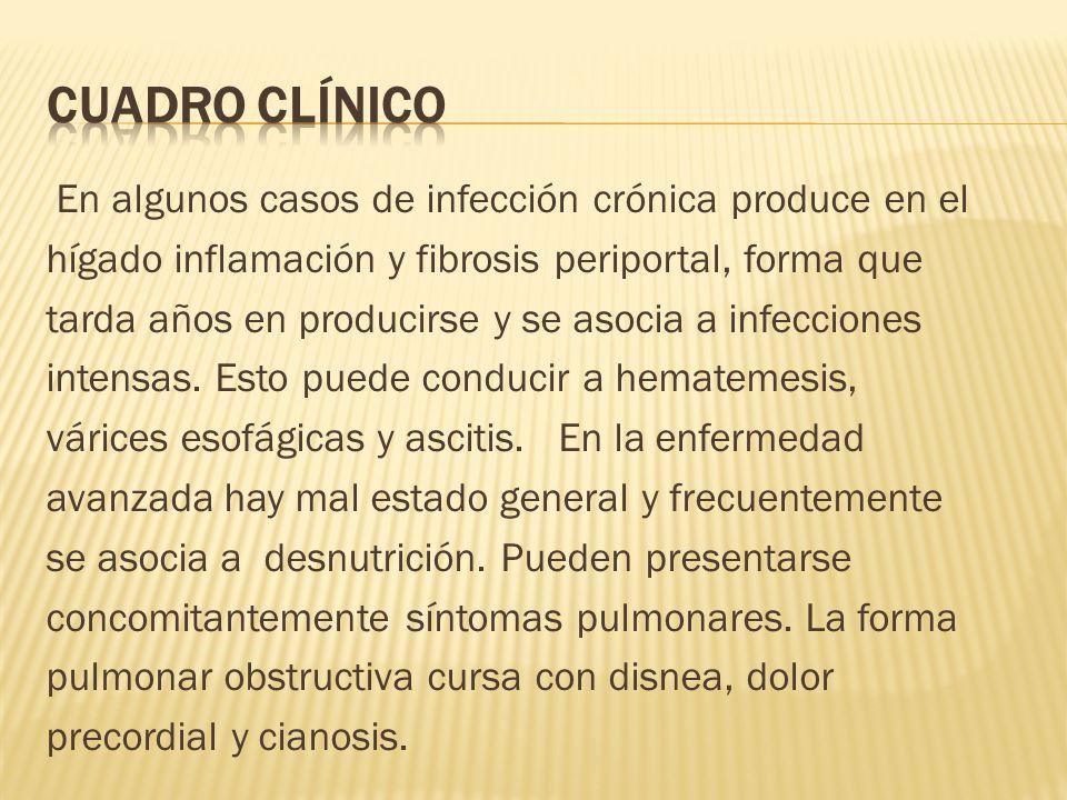 En algunos casos de infección crónica produce en el hígado inflamación y fibrosis periportal, forma que tarda años en producirse y se asocia a infecci