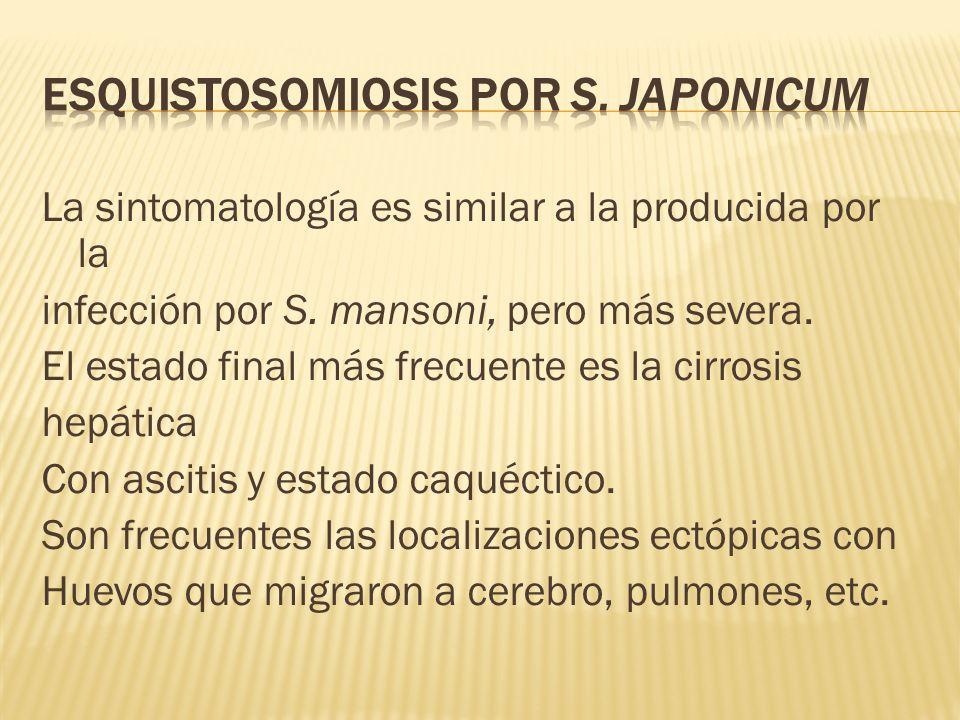 La sintomatología es similar a la producida por la infección por S. mansoni, pero más severa. El estado final más frecuente es la cirrosis hepática Co
