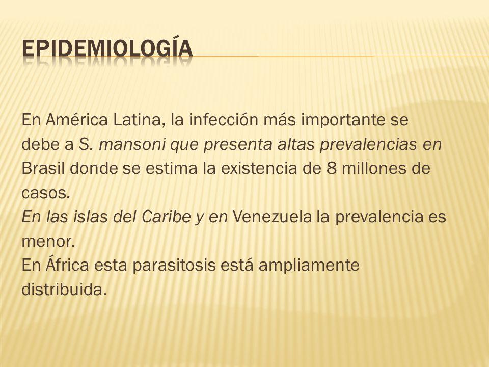 En América Latina, la infección más importante se debe a S. mansoni que presenta altas prevalencias en Brasil donde se estima la existencia de 8 millo