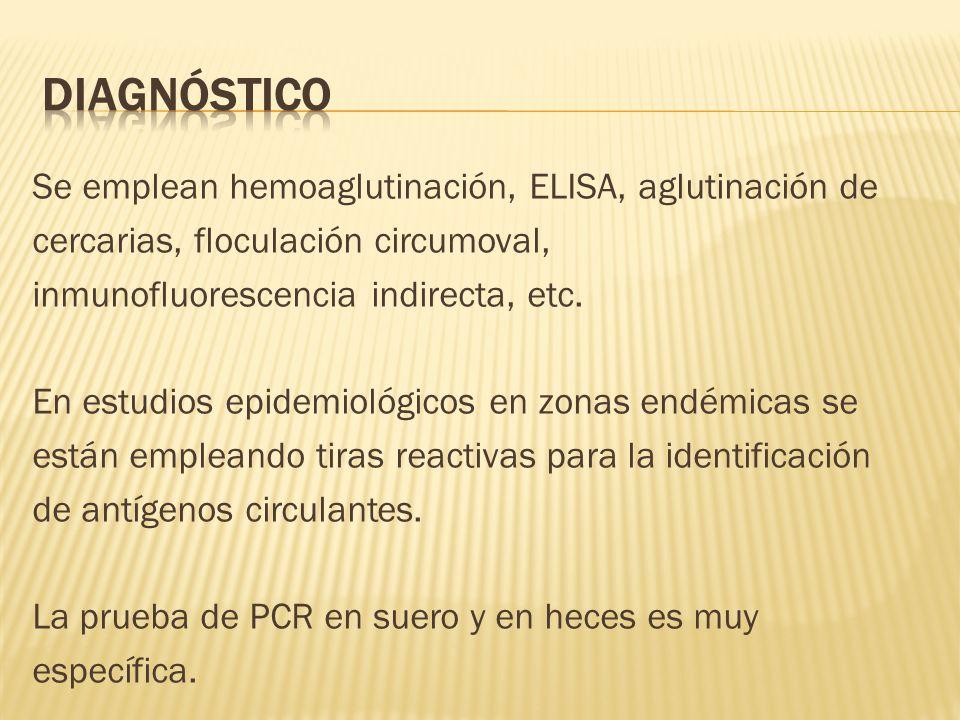 Se emplean hemoaglutinación, ELISA, aglutinación de cercarias, floculación circumoval, inmunofluorescencia indirecta, etc. En estudios epidemiológicos