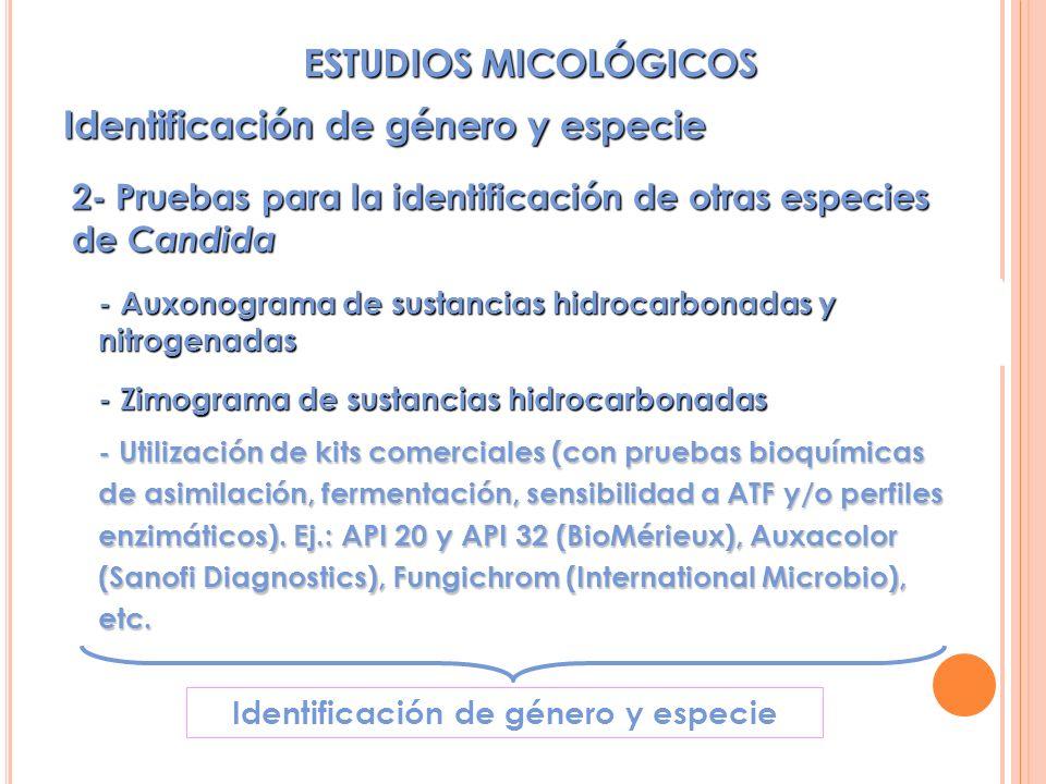 2- Pruebas para la identificación de otras especies de Candida - Auxonograma de sustancias hidrocarbonadas y nitrogenadas - Zimograma de sustancias hidrocarbonadas - Utilización de kits comerciales (con pruebas bioquímicas de asimilación, fermentación, sensibilidad a ATF y/o perfiles enzimáticos).