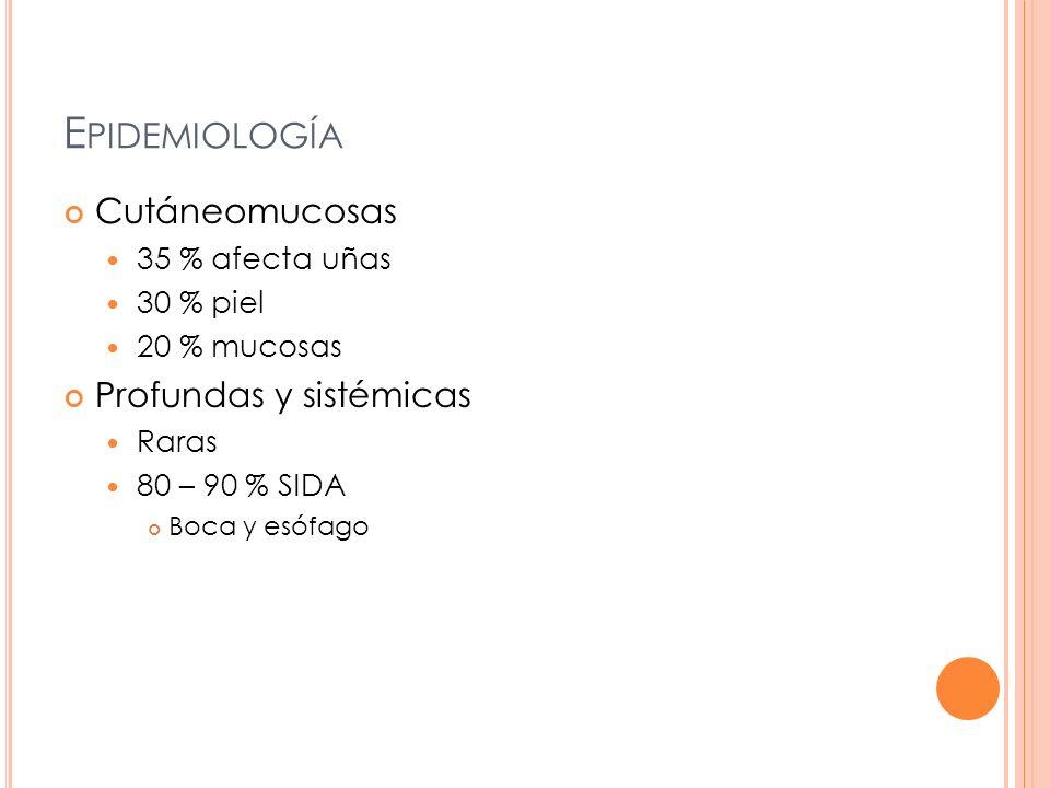 AGENTES ETIOLÓGICOS 81 especies ( 7 causan enfermedades en humanos) Candida albicans C.