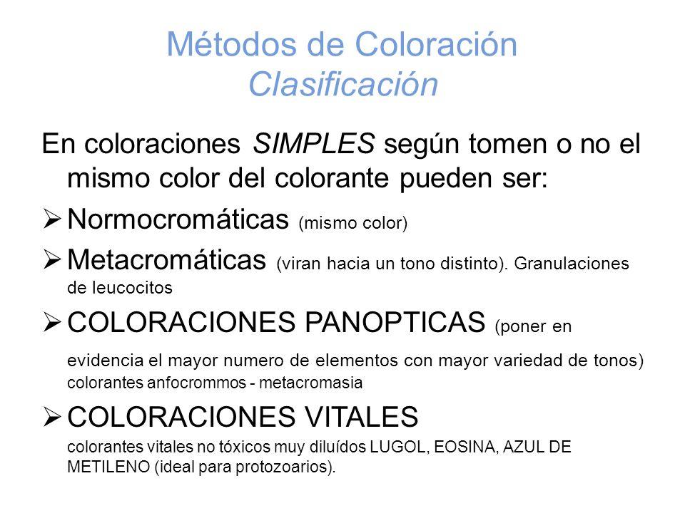 Métodos de Coloración Clasificación En coloraciones SIMPLES según tomen o no el mismo color del colorante pueden ser: Normocromáticas (mismo color) Me