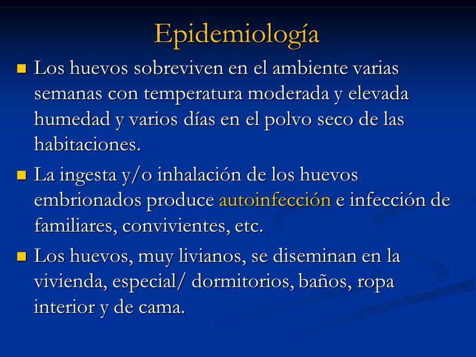 Epidemiología Los huevos sobreviven en el ambiente varias semanas con temperatura moderada y elevada humedad y varios días en el polvo seco de las hab