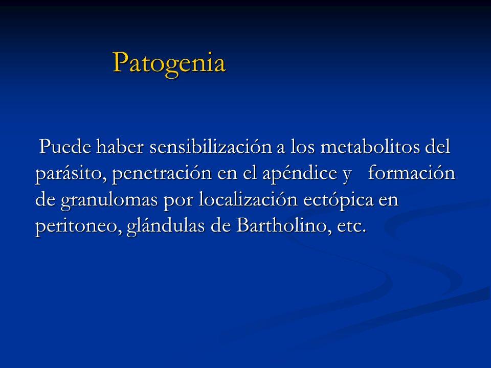 Patogenia Puede haber sensibilización a los metabolitos del parásito, penetración en el apéndice y formación de granulomas por localización ectópica e