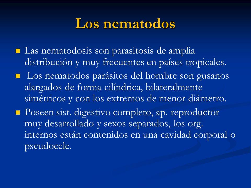 Los nematodos Las nematodosis son parasitosis de amplia distribución y muy frecuentes en países tropicales. Los nematodos parásitos del hombre son gus