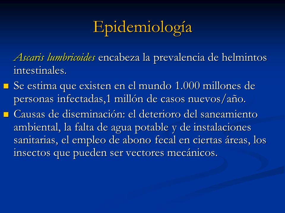 Epidemiología Ascaris lumbricoides encabeza la prevalencia de helmintos intestinales. Se estima que existen en el mundo 1.000 millones de personas inf