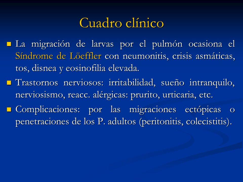 Cuadro clínico La migración de larvas por el pulmón ocasiona el Síndrome de Löeffler con neumonitis, crisis asmáticas, tos, disnea y eosinofilia eleva