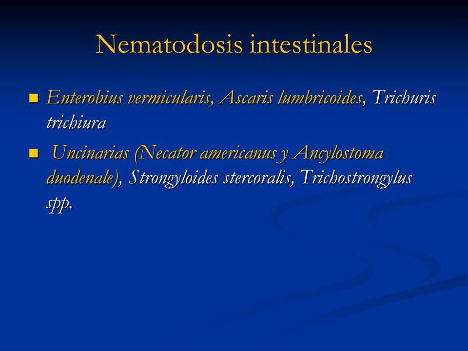 Nematodosis intestinales Enterobius vermicularis, Ascaris lumbricoides, Trichuris trichiura Enterobius vermicularis, Ascaris lumbricoides, Trichuris t