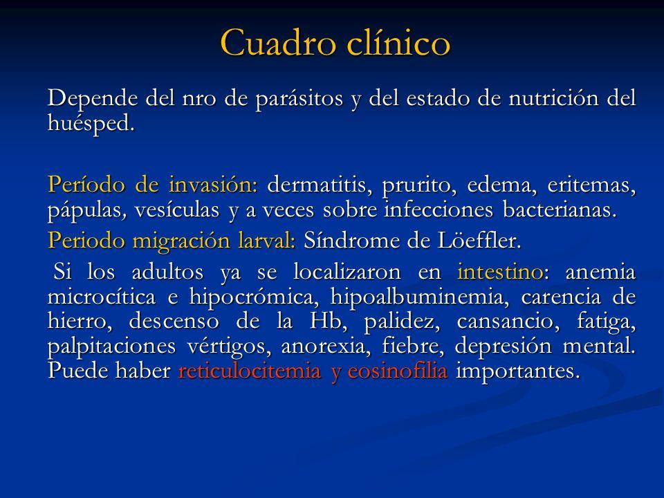 Cuadro clínico Depende del nro de parásitos y del estado de nutrición del huésped. Período de invasión: dermatitis, prurito, edema, eritemas, pápulas,