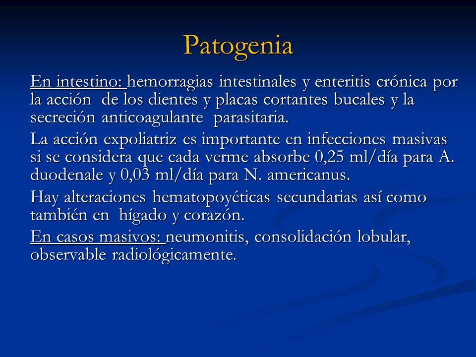 Patogenia En intestino: hemorragias intestinales y enteritis crónica por la acción de los dientes y placas cortantes bucales y la secreción anticoagul