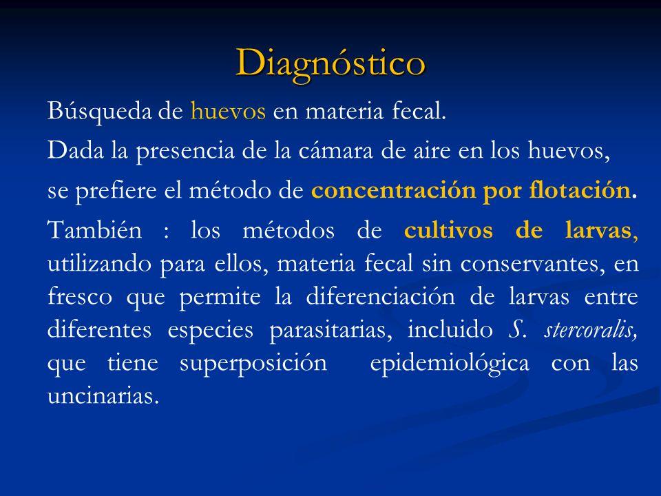 Diagnóstico Búsqueda de huevos en materia fecal. Dada la presencia de la cámara de aire en los huevos, se prefiere el método de concentración por flot