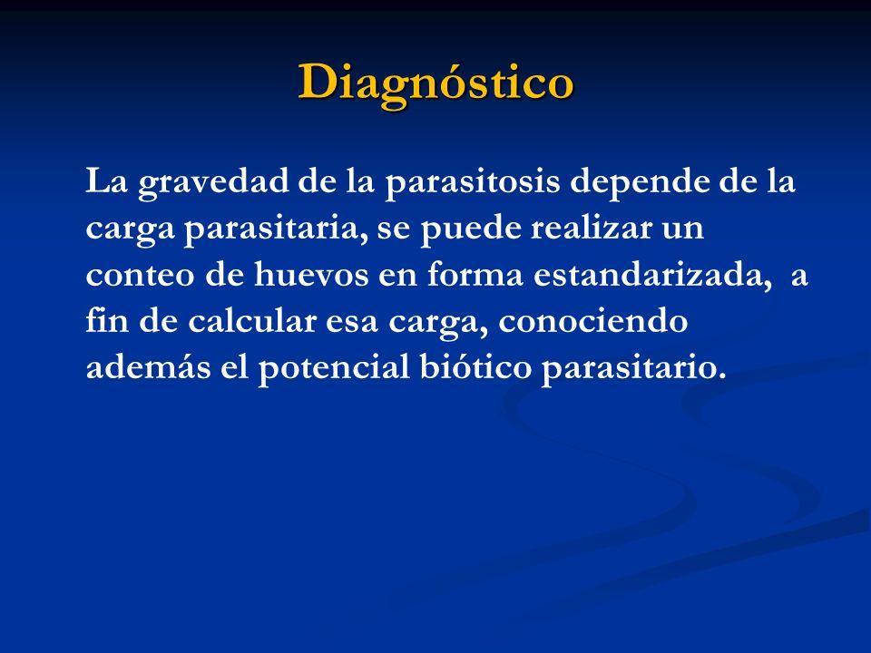 Diagnóstico La gravedad de la parasitosis depende de la carga parasitaria, se puede realizar un conteo de huevos en forma estandarizada, a fin de calc
