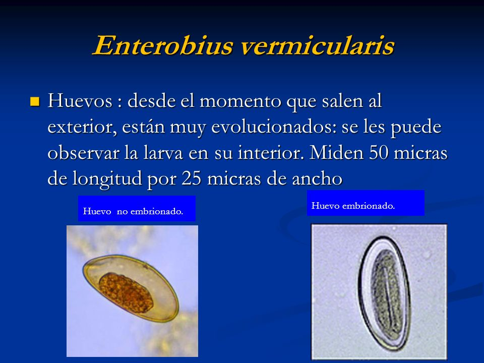 E.vermicularis. Adulto hembra y macho: extremo post.