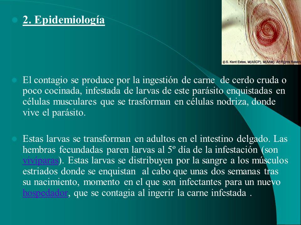 2. Epidemiología El contagio se produce por la ingestión de carne de cerdo cruda o poco cocinada, infestada de larvas de este parásito enquistadas en