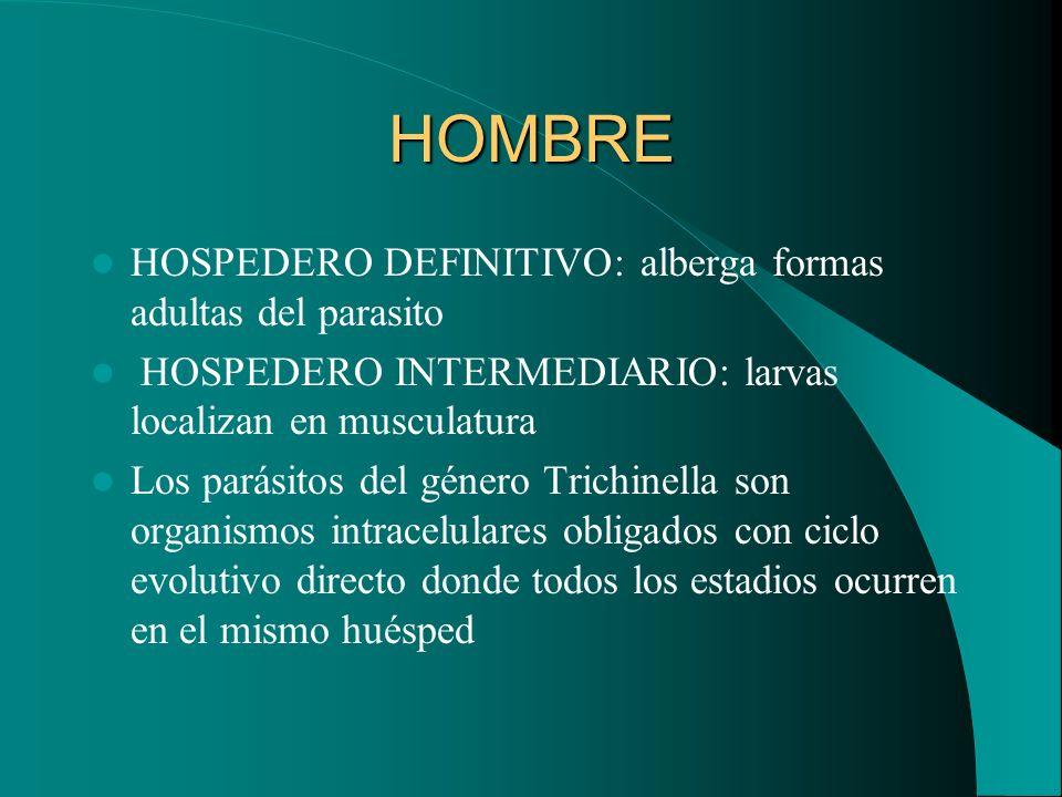 HOMBRE HOSPEDERO DEFINITIVO: alberga formas adultas del parasito HOSPEDERO INTERMEDIARIO: larvas localizan en musculatura Los parásitos del género Tri