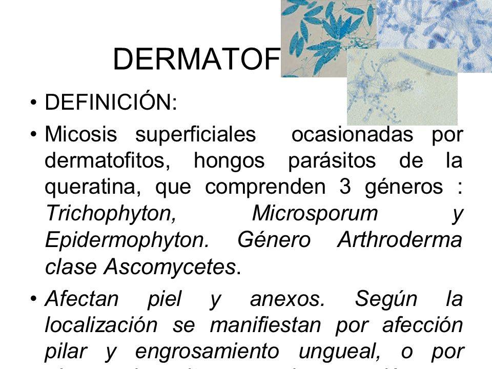 DERMATOFITOSIS DEFINICIÓN: Micosis superficiales ocasionadas por dermatofitos, hongos parásitos de la queratina, que comprenden 3 géneros : Trichophyt