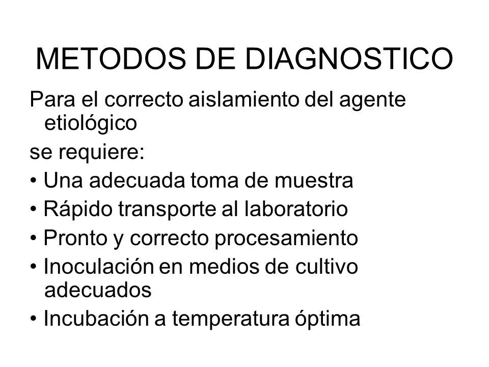 METODOS DE DIAGNOSTICO Para el correcto aislamiento del agente etiológico se requiere: Una adecuada toma de muestra Rápido transporte al laboratorio P