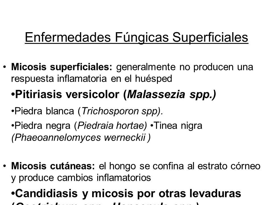 Enfermedades Fúngicas Superficiales Micosis superficiales: generalmente no producen una respuesta inflamatoria en el huésped Pitiriasis versicolor (Ma