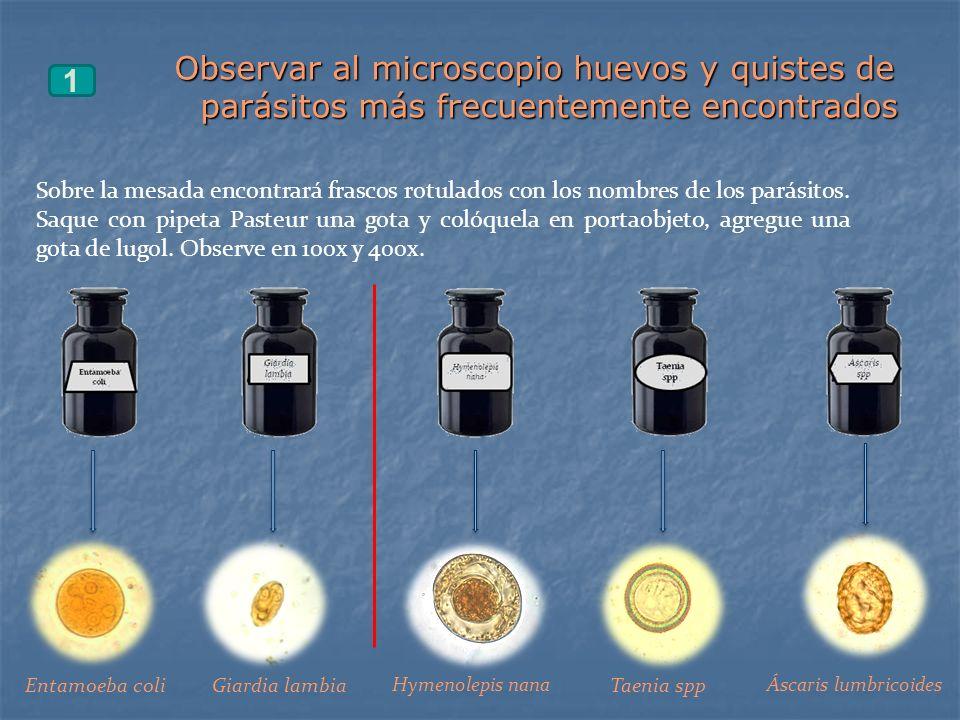 Observar al microscopio huevos y quistes de parásitos más frecuentemente encontrados 1 Sobre la mesada encontrará frascos rotulados con los nombres de