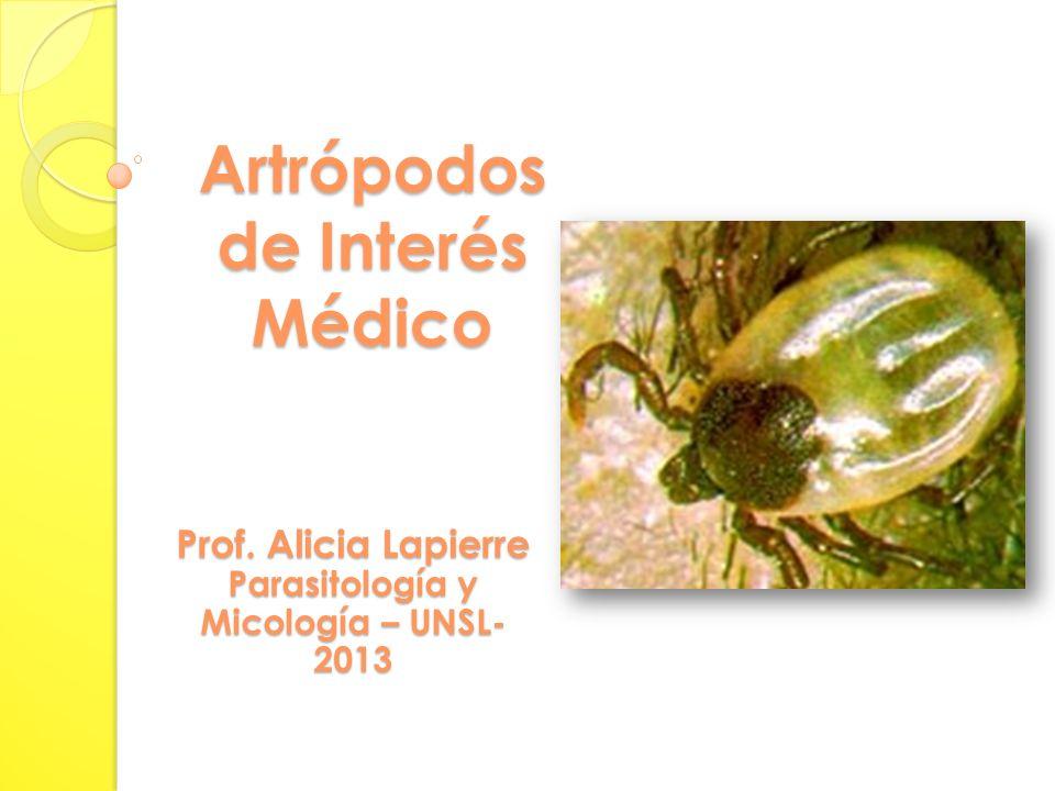 Artrópodos de Interés Médico Prof. Alicia Lapierre Parasitología y Micología – UNSL- 2013