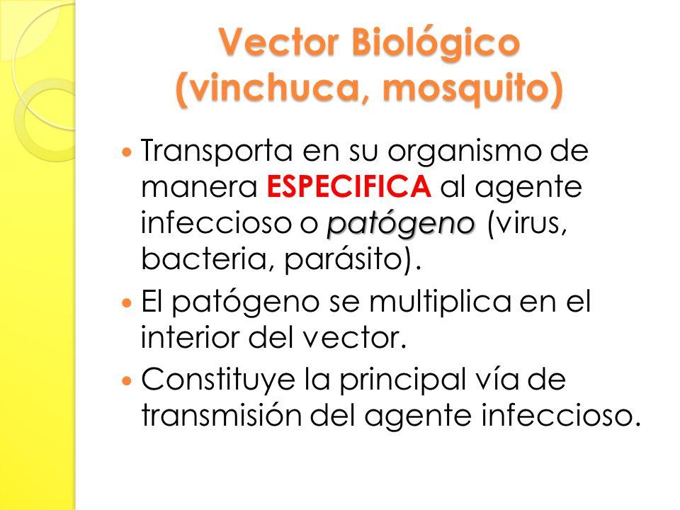 Vector Biológico (vinchuca, mosquito) patógeno Transporta en su organismo de manera ESPECIFICA al agente infeccioso o patógeno (virus, bacteria, parásito).