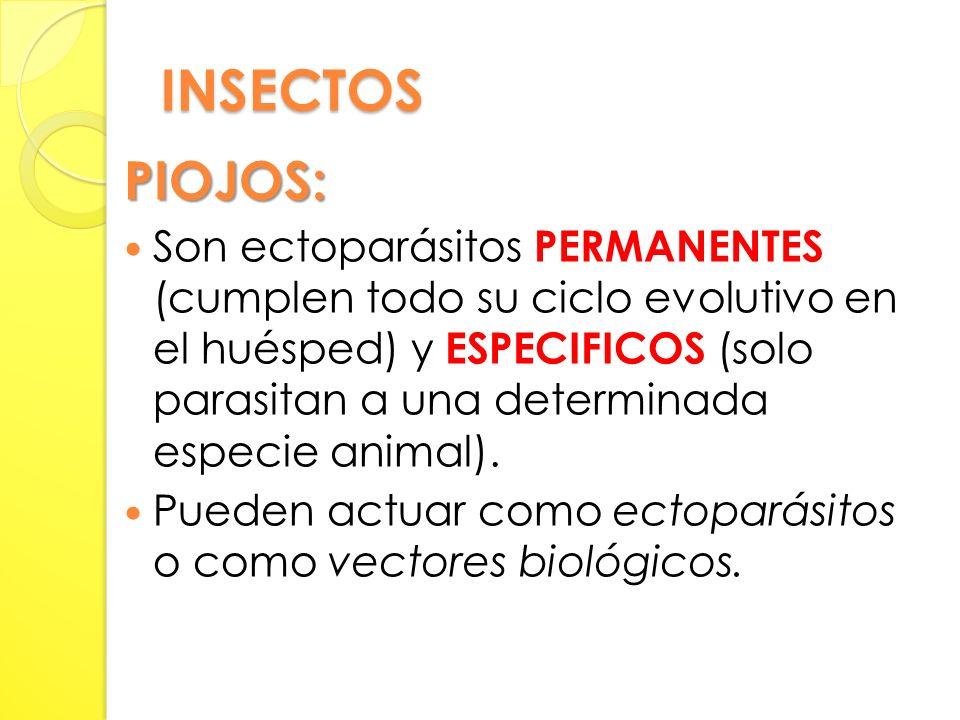 INSECTOS PIOJOS: Son ectoparásitos PERMANENTES (cumplen todo su ciclo evolutivo en el huésped) y ESPECIFICOS (solo parasitan a una determinada especie animal).