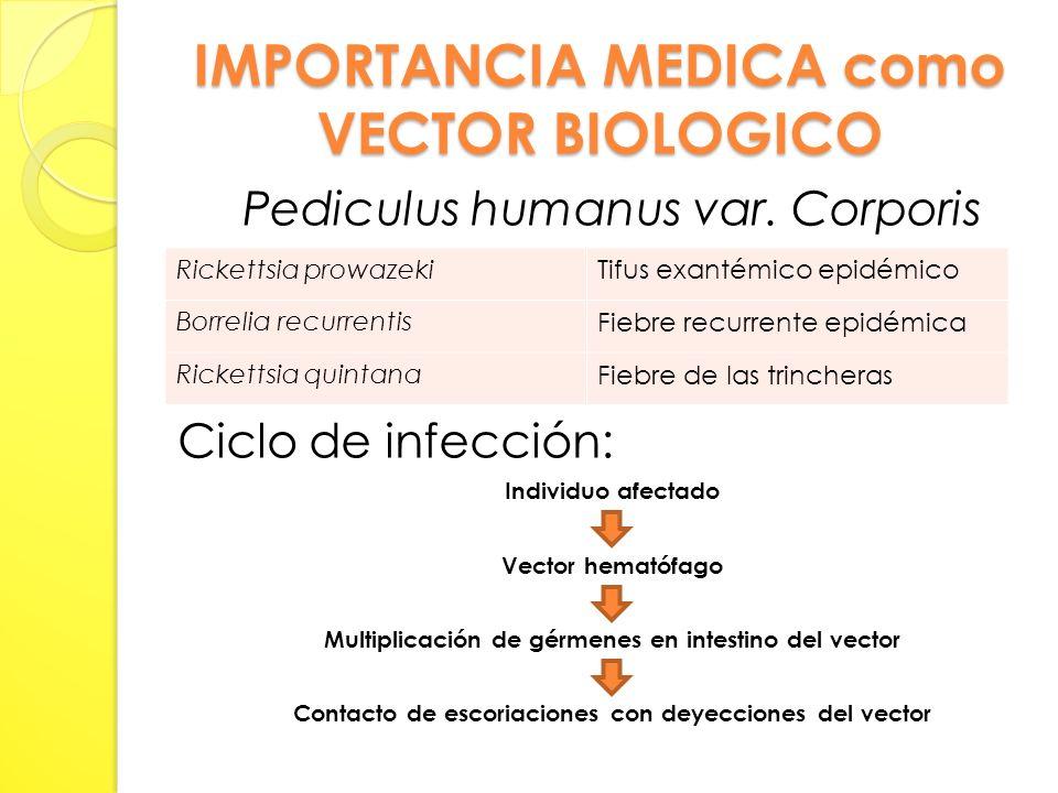 IMPORTANCIA MEDICA como VECTOR BIOLOGICO Pediculus humanus var.