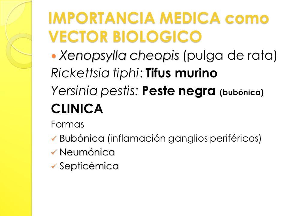IMPORTANCIA MEDICA como VECTOR BIOLOGICO Xenopsylla cheopis Xenopsylla cheopis (pulga de rata) Rickettsia tiphi: Tifus murino Yersinia pestis: Peste negra (bubónica) CLINICA Formas Bubónica Bubónica (inflamación ganglios periféricos) Neumónica Neumónica Septicémica Septicémica