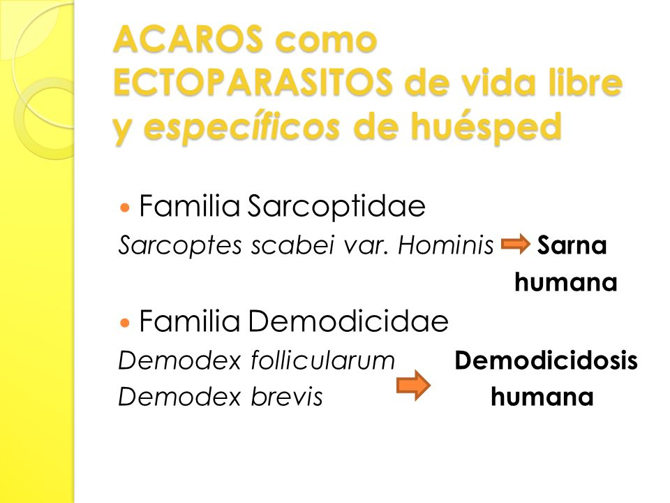 ACAROS como ECTOPARASITOS de vida libre y específicos de huésped Familia Sarcoptidae Sarcoptes scabei var.
