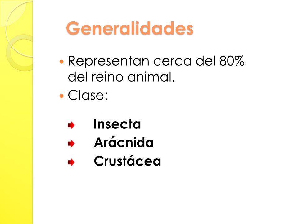 Generalidades Representan cerca del 80% del reino animal. Clase: Insecta Arácnida Crustácea