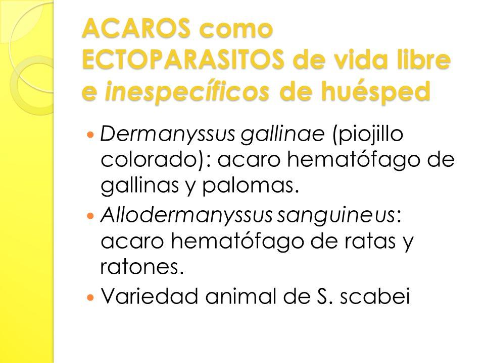ACAROS como ECTOPARASITOS de vida libre e inespecíficos de huésped Dermanyssus gallinae (piojillo colorado): acaro hematófago de gallinas y palomas.