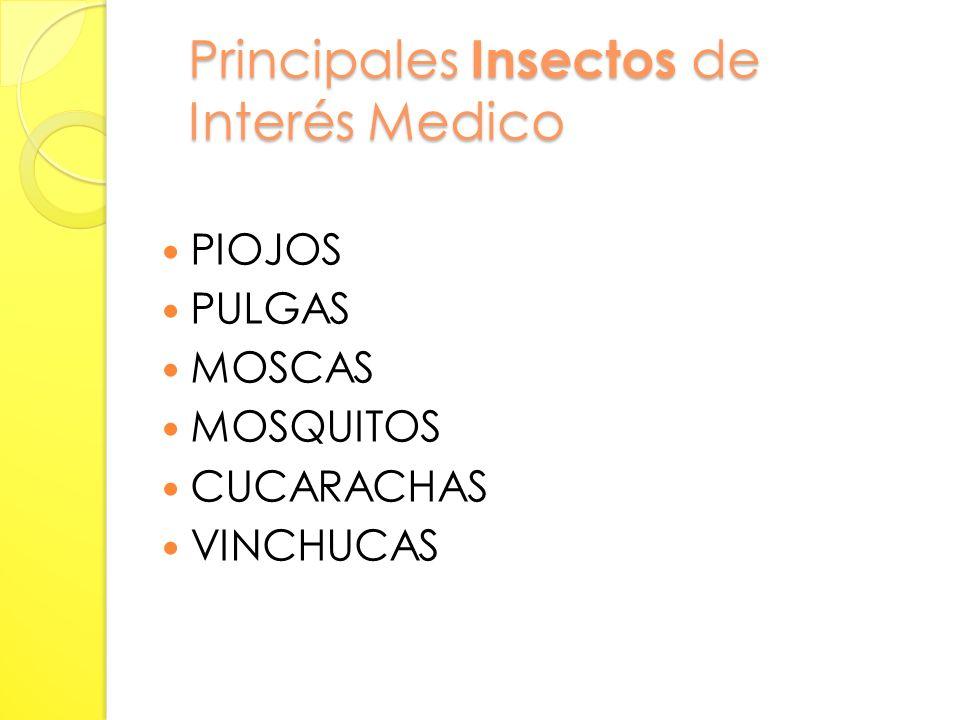 Principales Insectos de Interés Medico PIOJOS PULGAS MOSCAS MOSQUITOS CUCARACHAS VINCHUCAS