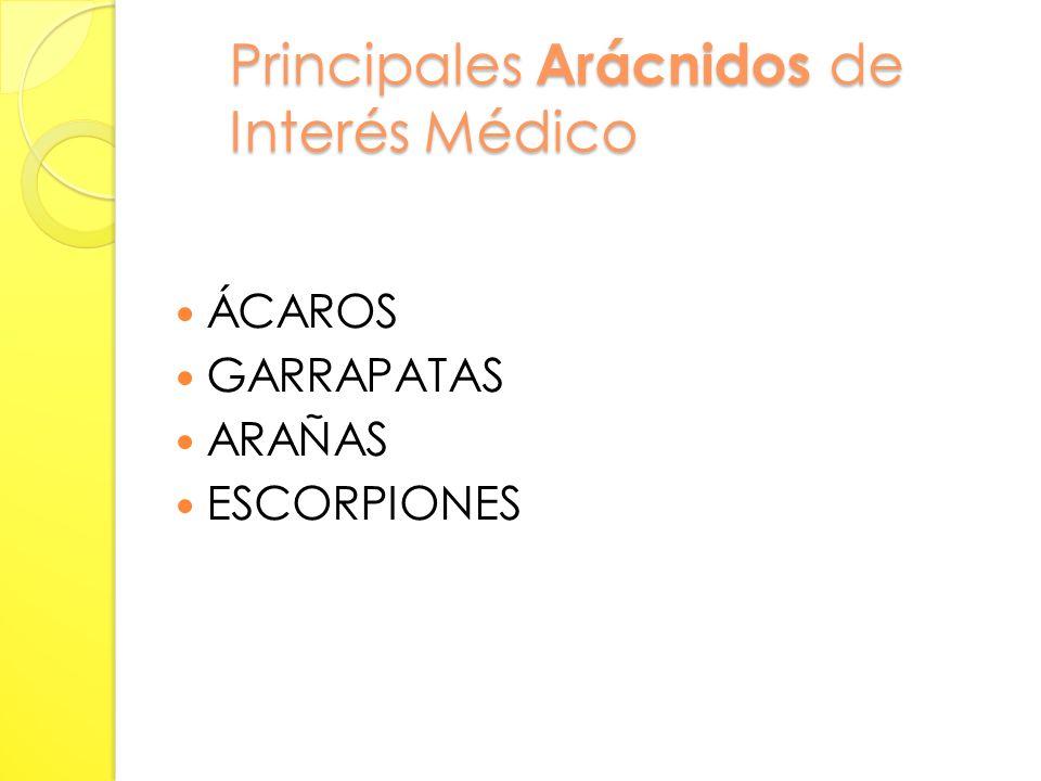 Importancia Médica Pueden ser responsables de la enfermedad en forma: DIRECTA: DIRECTA: por sí mismos son capaces de hacer daño.