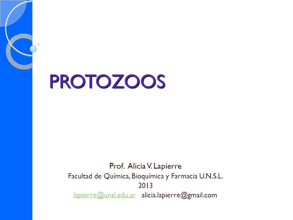 PROTOZOOS Prof. Alicia V. Lapierre Facultad de Química, Bioquímica y Farmacia U.N.S.L. 2013 lapierre@unsl.edu.arlapierre@unsl.edu.ar alicia.lapierre@g