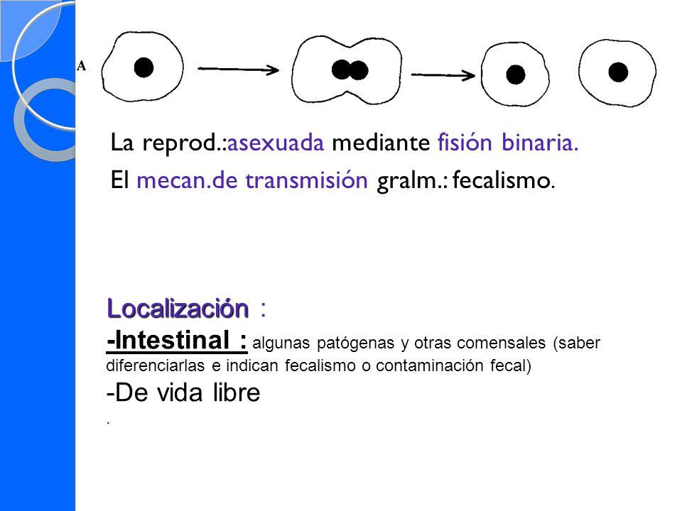La reprod.:asexuada mediante fisión binaria. El mecan.de transmisión gralm.: fecalismo. Localización Localización : -Intestinal : -Intestinal : alguna