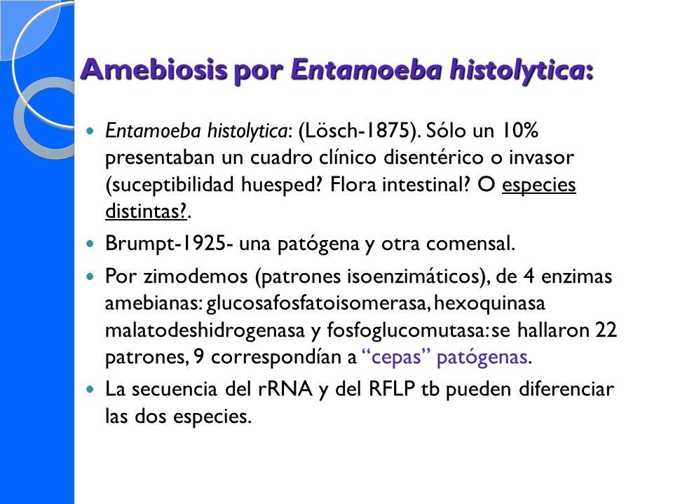 Amebiosis por Entamoeba histolytica: Entamoeba histolytica: (Lösch-1875). Sólo un 10% presentaban un cuadro clínico disentérico o invasor (suceptibili