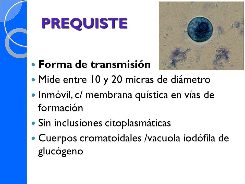 PREQUISTE Forma de transmisión Mide entre 10 y 20 micras de diámetro Inmóvil, c/ membrana quística en vías de formación Sin inclusiones citoplasmática