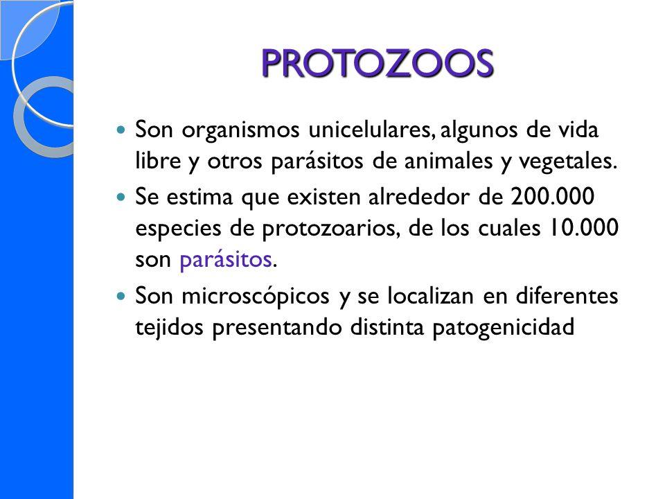 PROTOZOOS Son organismos unicelulares, algunos de vida libre y otros parásitos de animales y vegetales. Se estima que existen alrededor de 200.000 esp