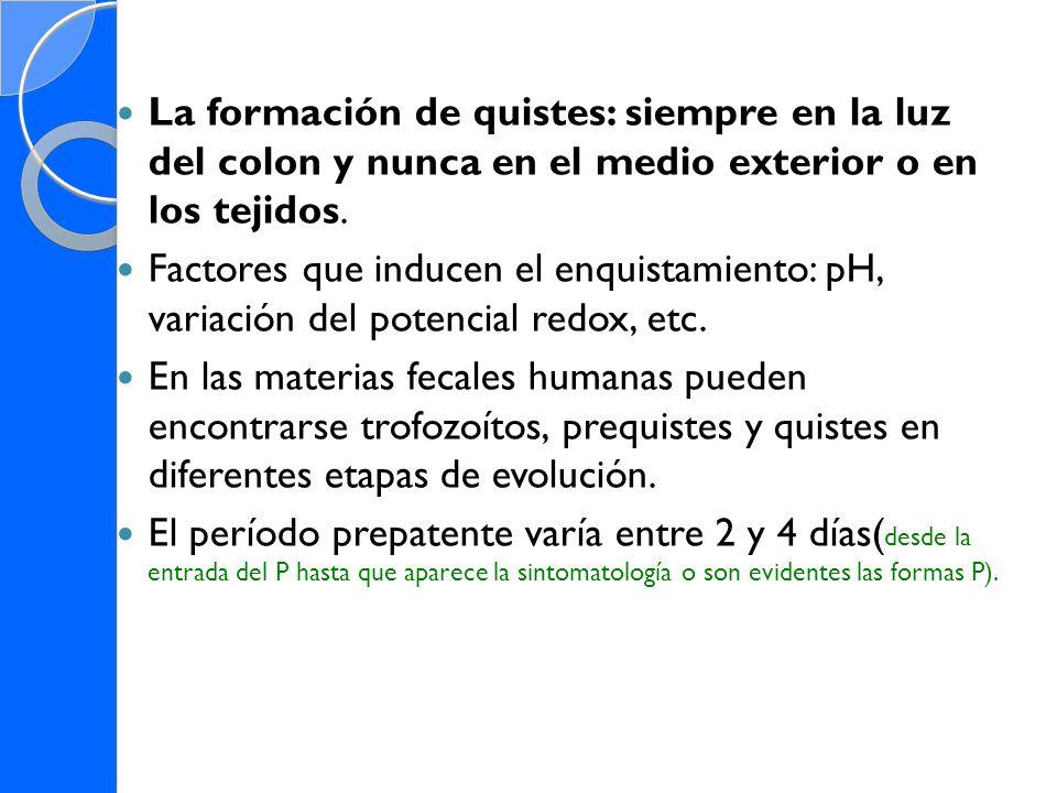 La formación de quistes: siempre en la luz del colon y nunca en el medio exterior o en los tejidos. Factores que inducen el enquistamiento: pH, variac