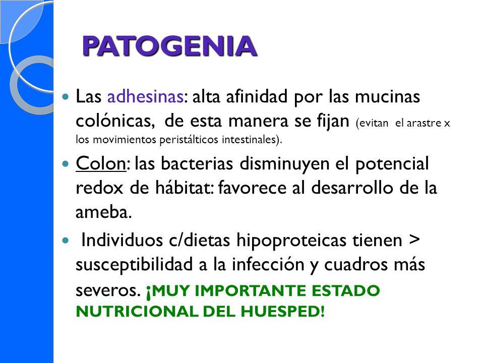 PATOGENIA Las adhesinas: alta afinidad por las mucinas colónicas, de esta manera se fijan (evitan el arastre x los movimientos peristálticos intestina