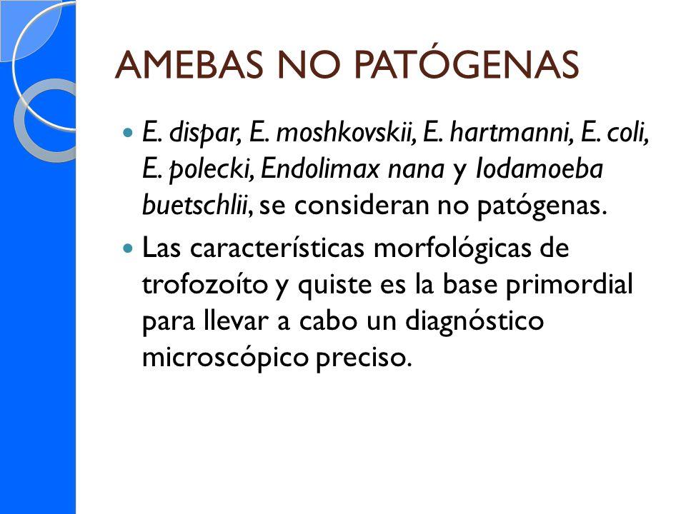 AMEBAS NO PATÓGENAS E. dispar, E. moshkovskii, E. hartmanni, E. coli, E. polecki, Endolimax nana y Iodamoeba buetschlii, se consideran no patógenas. L