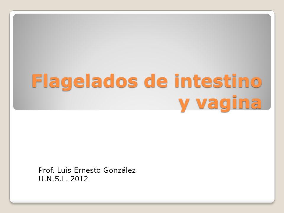 Flagelados de intestino y vagina Prof. Luis Ernesto González U.N.S.L. 2012