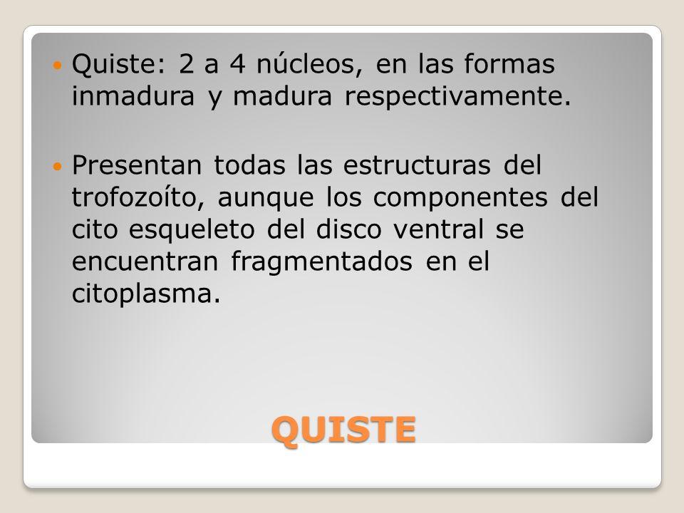 QUISTE Quiste: 2 a 4 núcleos, en las formas inmadura y madura respectivamente. Presentan todas las estructuras del trofozoíto, aunque los componentes